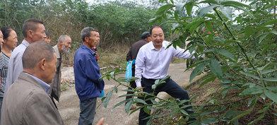 江津区科协:科普惠农带领致富 花椒产业帮扶脱贫